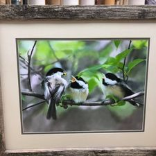birds in frame